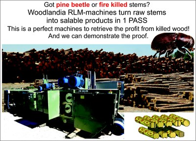solution for pine bittle stems-01.jpg