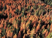 Woodlandia machines can help to process pine beetle killed stems